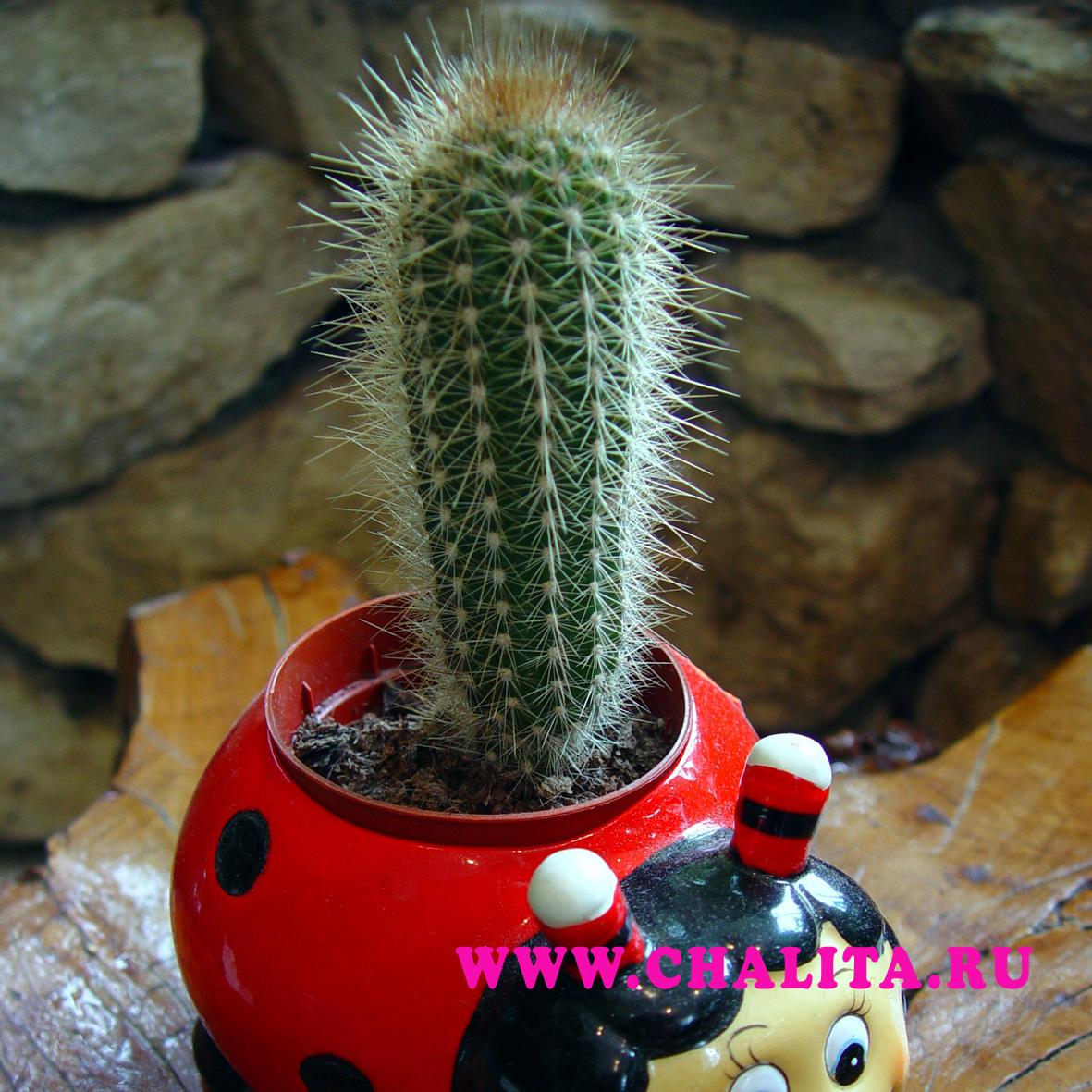 Растение видное